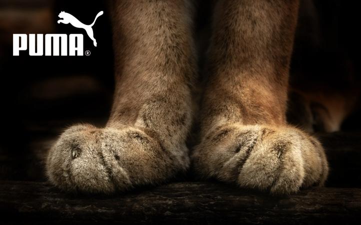 Paire de Pattes de Puma fond écran wallpaper