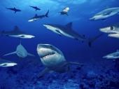 fond écran Requins