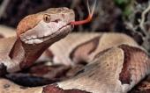 fond écran 05-serpent