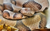 fond écran 07-serpent