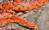 fond écran 10-serpent