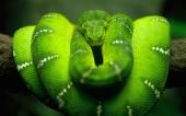 fond écran Serpent bien Vert