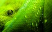 fond écran Serpent