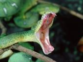 fond écran Serpents