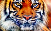 fond écran 10-tigre
