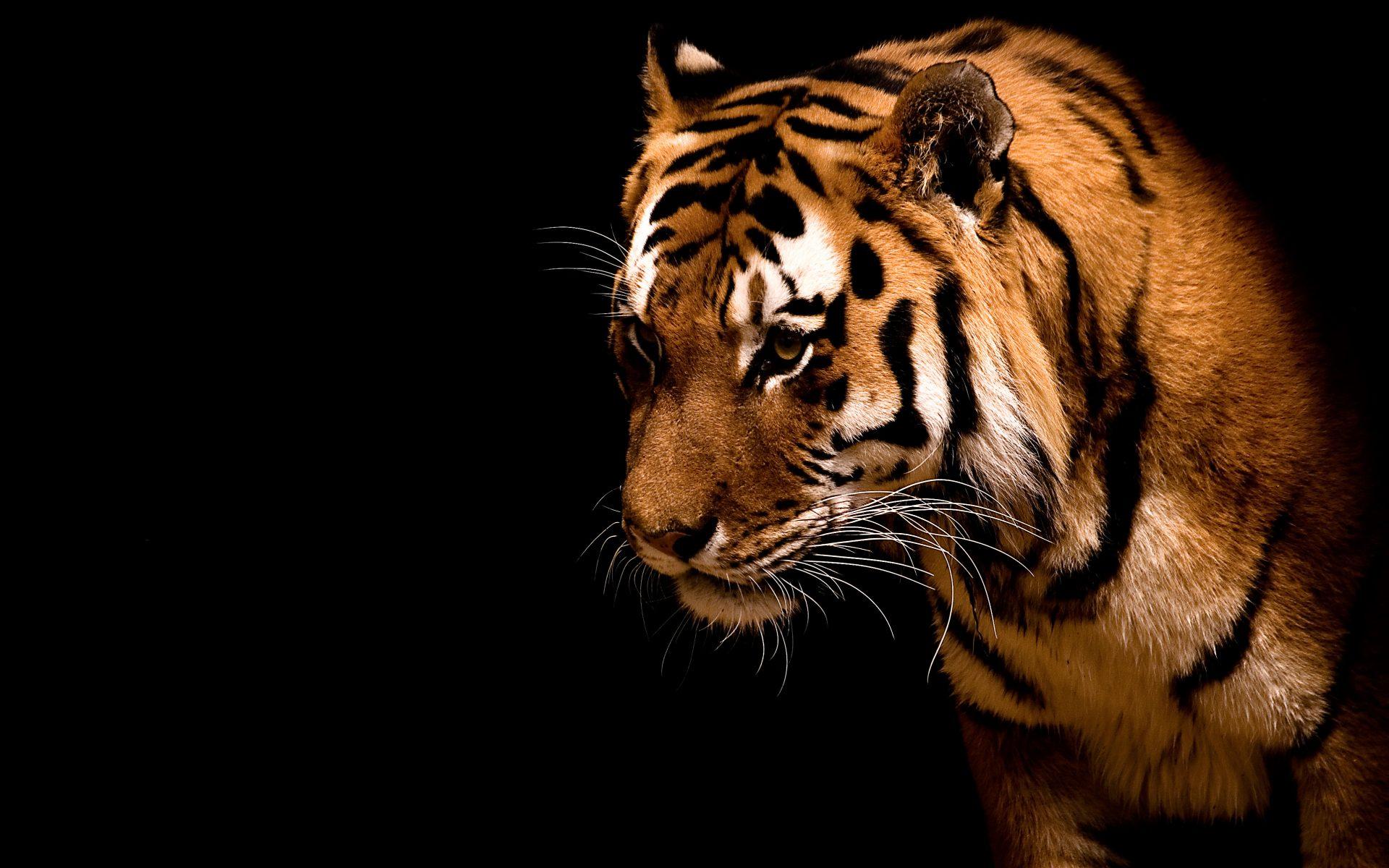 Queres imagenes de felinos salvajes en hd entra taringa - Animaux wallpaper ...