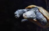 fond écran 03-tortue