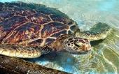 fond écran 06-tortue