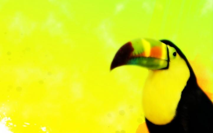 05-toucan fond écran wallpaper