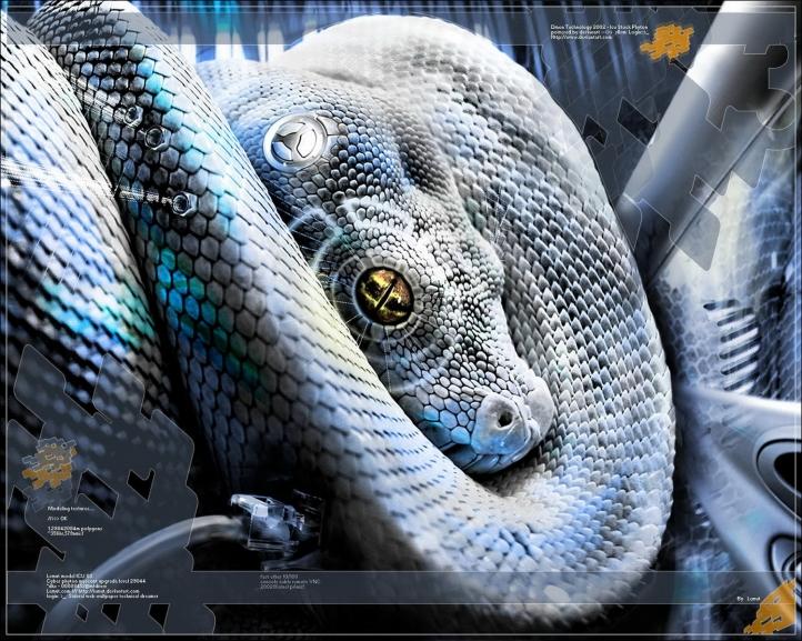 Serpent fond écran wallpaper