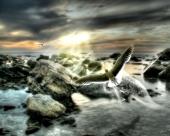 fond écran oiseaux sur plage
