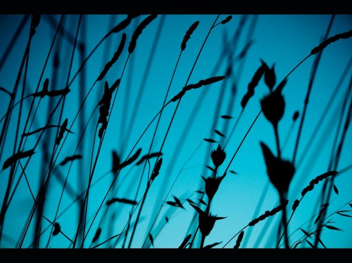 Herbes fond écran wallpaper