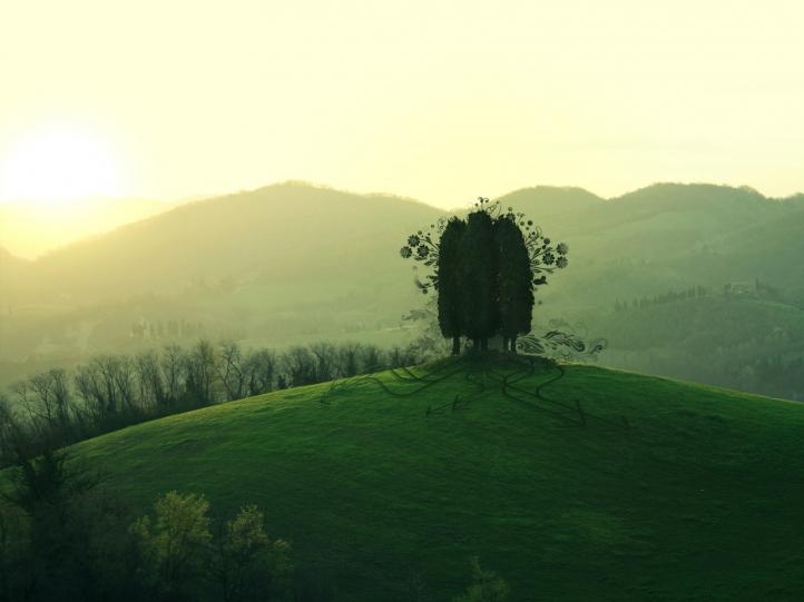 L'arbre fond écran wallpaper