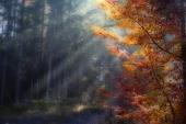 fond écran éclat de lumière �  l'automne