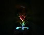 fond écran Fleur coloré