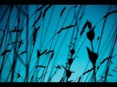fond écran Herbes