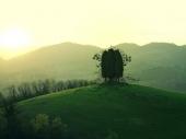 fond écran L'arbre