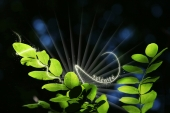 miniature nature sérénité
