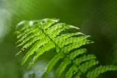 miniature nature zen