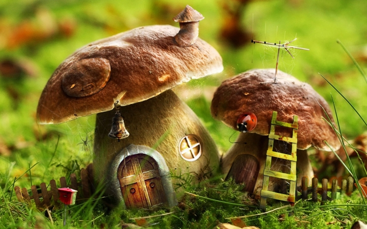 Mushroom Home fond écran wallpaper