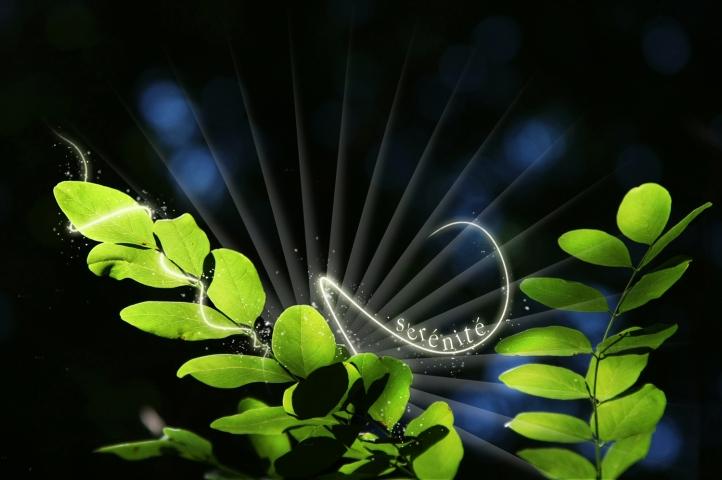 Sérénité 2011 dans 2011 - PREDICTIONS nature-serenite-720px