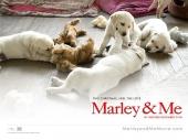 fond écran Marley & moi