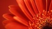 fond écran Fleur Vista