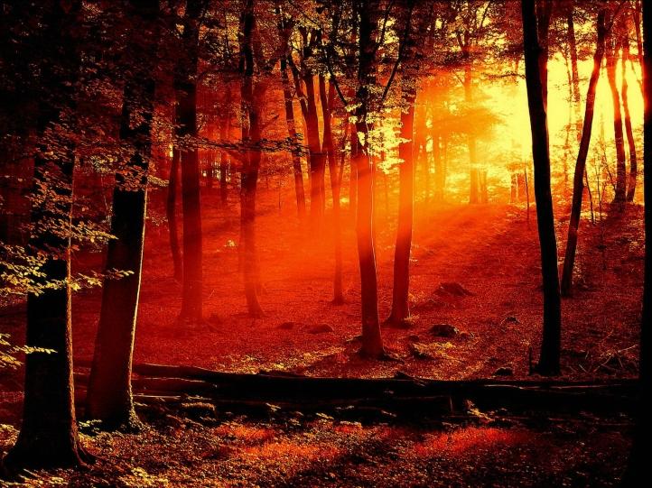 foret-coucher-de-soleil-720px dans fond ecran foret
