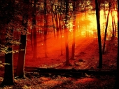 fond écran foret coucher de soleil