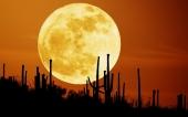 fond écran Soleil Cactus