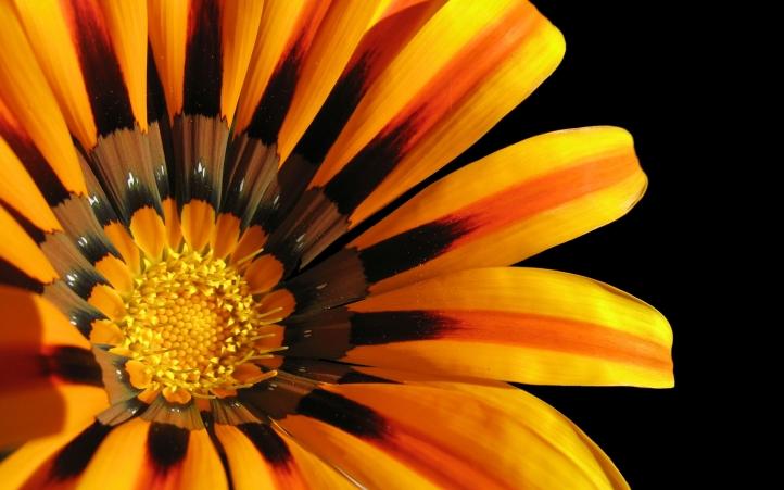 01-belle fleur fond écran wallpaper