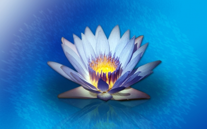 129-fleur fond écran wallpaper