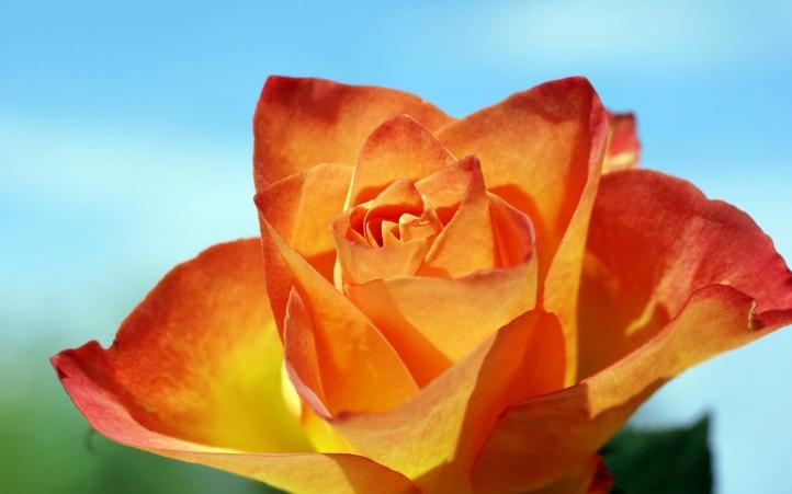 174-fleur fond écran wallpaper