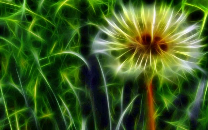 209-fleur fond écran wallpaper