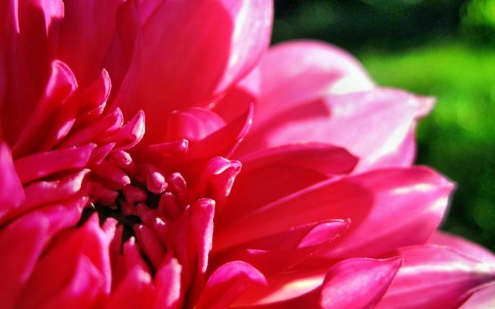 229-fleur fond écran wallpaper