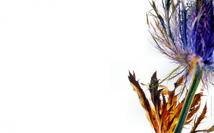 243-fleur fond écran wallpaper