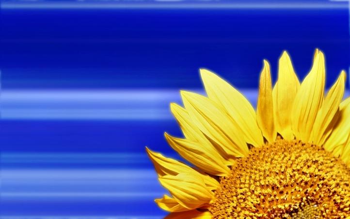 246-fleur fond écran wallpaper