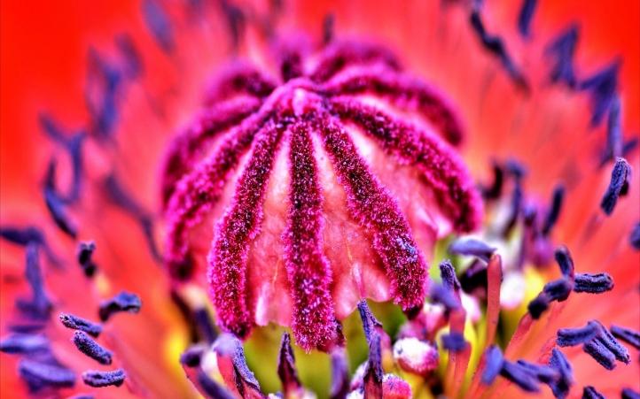 255-fleur fond écran wallpaper