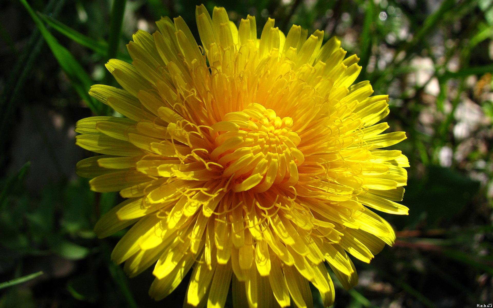 Fleur fleurs nature jpg 265801 - Initiatives fleurs et nature ...