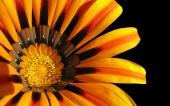 01-belle fleur