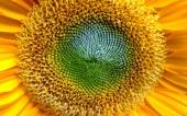 miniature 04-belle fleur