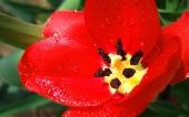 miniature 05-belle fleur