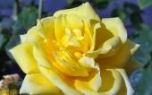 105-fleur