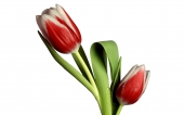 fond écran 146-fleur