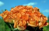 fond écran 150-fleur