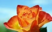 fond écran 174-fleur