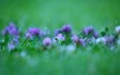 miniature 23- fleur