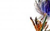fond écran 243-fleur