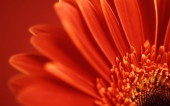 miniature 25- fleur
