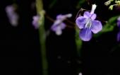 264-fleur